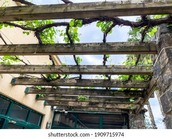 Grape vines covering wooden arbor early spring prior to leaves.