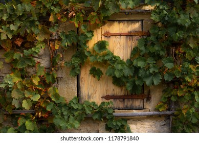 Grape vines hanging over the stone wall and wooden trapdoor from an old german house