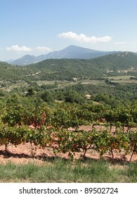 Grape vines in vineyard with Mont Ventoux in background, Suzette, France