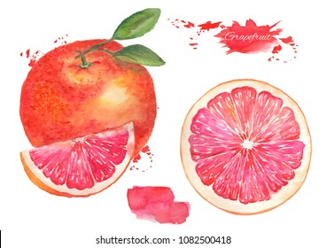Grapefruit with leaf and grapefruit slice watercolor illustration on an isolated background