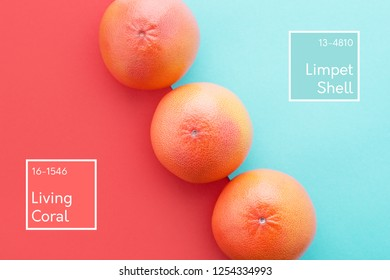 Grapefruits on Living Coral & pastel blue color diagonal background, Inscription. Minimal summer. Year 2019