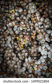 Grapes in basket top view, Isabella wine grapes