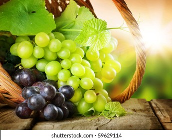 Grapes in the basket.Grapevine over vineyard background