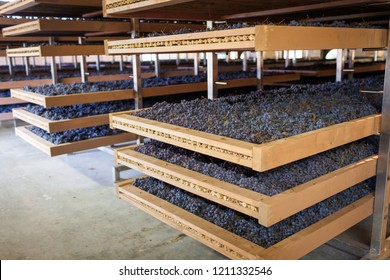 Grapes being dried on wood racks (called Appassimento in Italian) before being made into Amarone wine