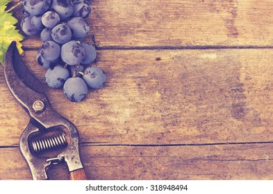 Grapes and grape scissors on a wooden rustic background - applied vintage, retro effect