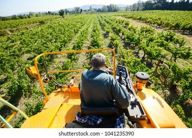 grapes harvesting mechanical machine vehicle in a vineyard during harvest wine season
