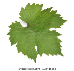 Grapes leaf. Isolated on white background
