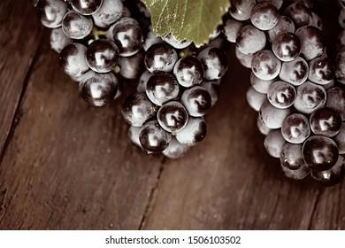 Grapes on a wooden barrel. Sepia tone.