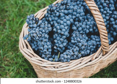 grapes wine grape blue background fruit red