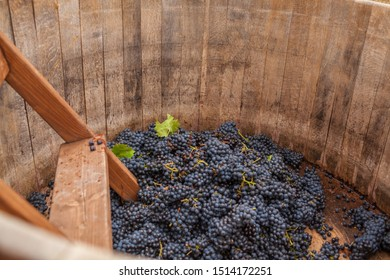 grapes for wine in a wooden barrel