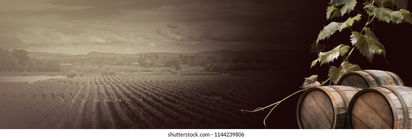 Grapevine and old wine barrels - wide landscape in vintage style for your composition of winemaking or viticulture. Vineyard and vine leaves - agriculture background for your banner or billboard.