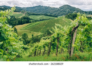 Grapevines in the hills of Southern Styria