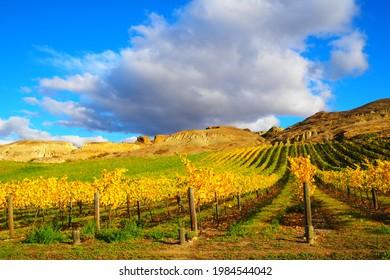 Grapevines showing Autumn Colours, Bannockburn, Central Otago, New Zealand