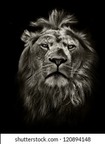 Royalty Free Lion Head Images Stock Photos Vectors Shutterstock