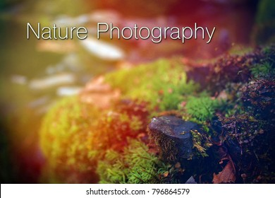 Graphic Design Words Nature Photography Typography Lettering in the Natural Woods