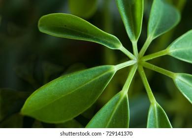Grapical plant close up