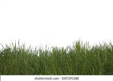gras on white background