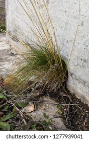 gras plant growing out of a beton wall