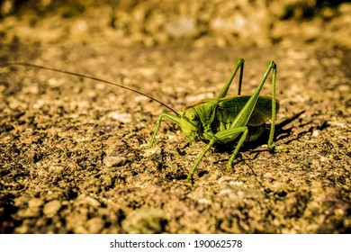 grashopper on the road