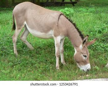 A grasping donkey