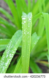 grass after the rain