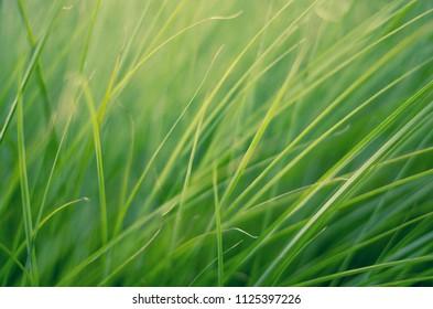 Grass art background