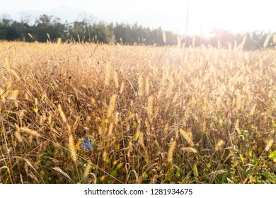 Grass in the autumn