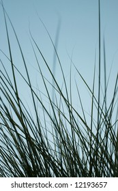 Grass and  background.