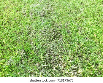 Grass background abstract on graden