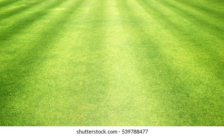 grass background green lawn pattern textured background.