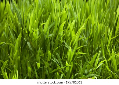 Grass background in a park