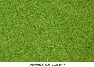 Grass background, top view