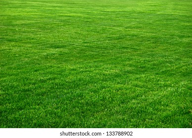 Grass Background With Vignette