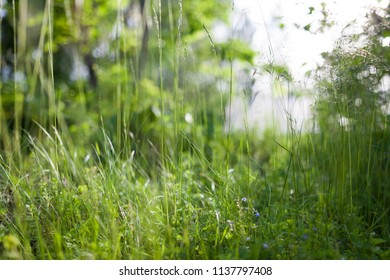 Grass in backyard close view summer background
