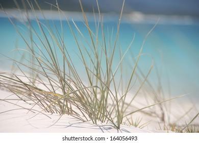 Grass at the Beach