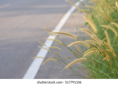 Grass beside the road