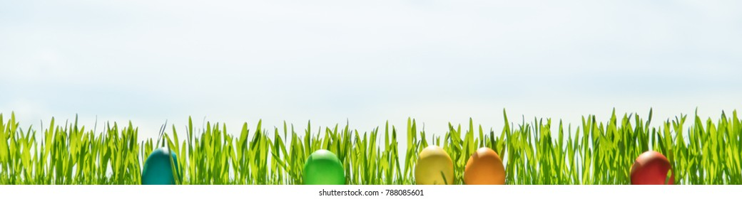 Grass blades and easter eggs in front of blue sky, header with copyspace