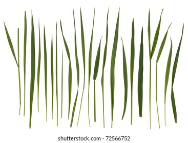 Blades of Grass Images, Stock Photos & Vectors | Shutterstock