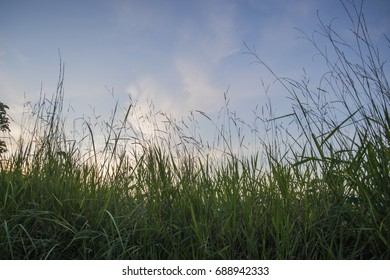 Grass in blue sky.