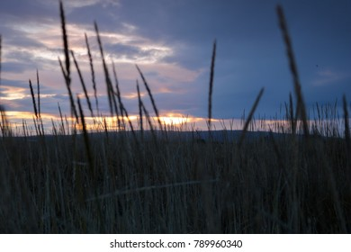 Grass by the shore at dusk. (Focus / lighting for artistic & impressionistic purposes)