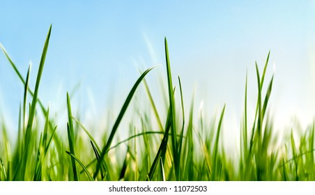 grass close to the ground view