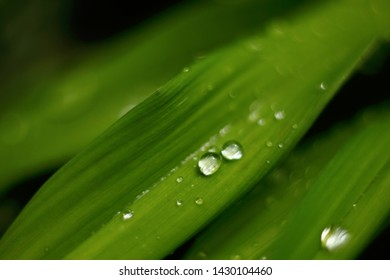 Grass close-up macro. Drops on leaf. Nature background.