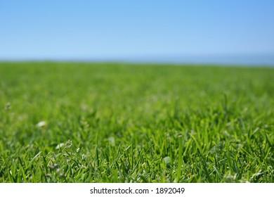 grass closeup, ocean and sky