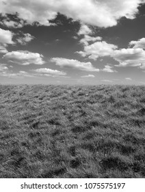 Grass and clouds as the background