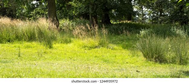 Grass clumps in sunshine