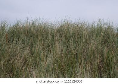 Grass at the coast