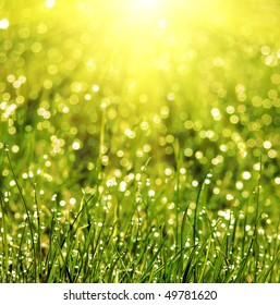 grass covered with dew in the sun