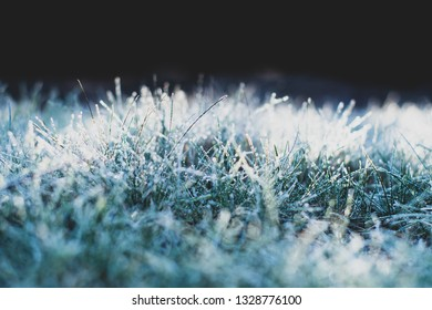 grass covered with frost