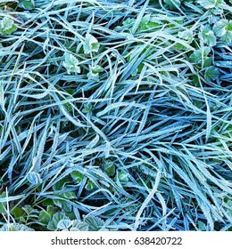 Grass covered with morning rime in Autumn.