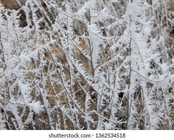 Grass in the desert covered with hoarfrost. Kazakhstan.